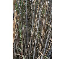 Bamboo Cover Photographic Print