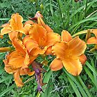 The Grasshopper and the Daylily by Carolyn Clark