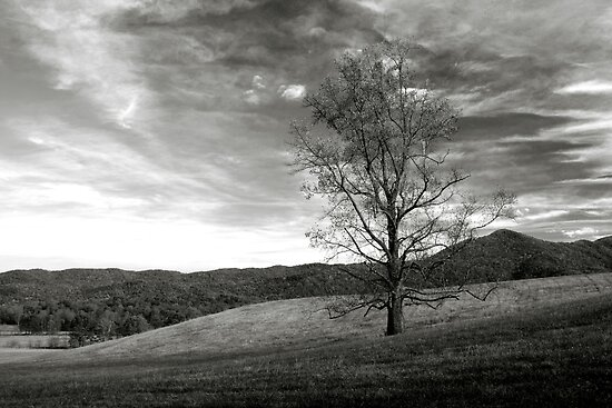 Lone Tree by Gary L   Suddath
