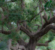 Lovely Oak by AhArtography