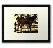Cavalry Steed Framed Print