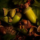 Acorns by Gazart