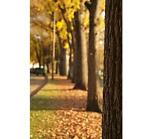 Yellow Trees in a Line Photographic Print