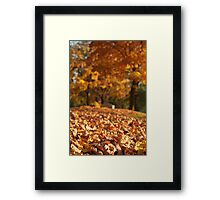 Autumn Path to Bench Framed Print