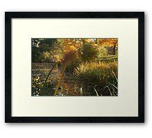 Orange Reed Framed Print