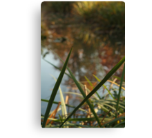 Through Nature Canvas Print