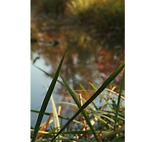 Through Nature Photographic Print