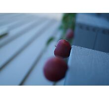 Apples in perspective 2 Photographic Print