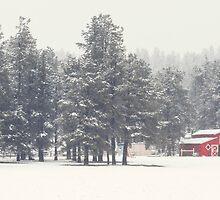 Flagstaff, Az - Red Barn by Candy Gemmill