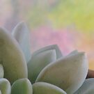 Succulent On The Windowsill  by AngieDavies