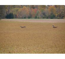 A buck chasing a doe.... Photographic Print