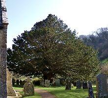 Church Tree............. by lynn carter