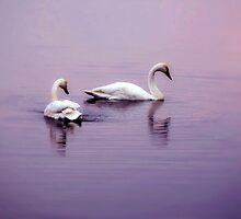 Swan Lake by Megan Noble