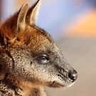 Orphan Wallaby by springplains