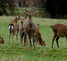 Studley Royal Deer Park,   again! by dougie1