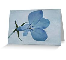 Blue Lobelia Macro Greeting Card
