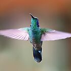 Violet-eared Hummingbird - Costa Rica by Jim Cumming