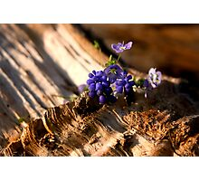 Deep Blue Photographic Print