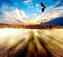 Forster Sunset by john NORRIS
