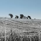 Distant Trees by pcimages