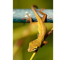 Little Lizard Photographic Print