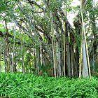 Banyon Tree by Rosalie Scanlon