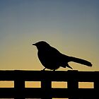 Bird Silhouette by Sekans