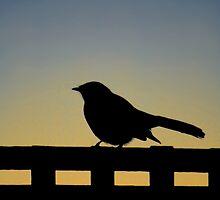 Bird Silhouette by Sekans
