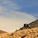 Desert Paint by Gene Praag