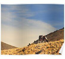 Desert Paint Poster