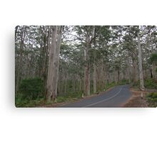 Forest of Giants, on the way to Augusta Canvas Print