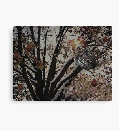 And a partridge in a pear tree .... Canvas Print