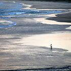 Pelican on Sawtell Beach by Colin Leal