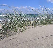 Sand Dune by Hummingbyrd