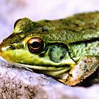 Frog  by clizzio