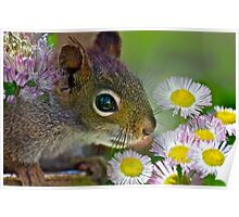 Flowers and Squirrel Poster