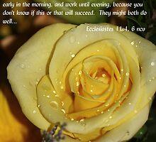 Ecclesiastes 11:4,6 by ZeeZeeshots