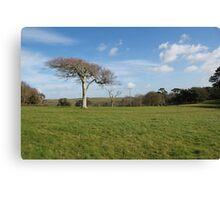 Winter trees at Menabilly,Cornwall Canvas Print