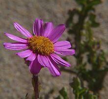 Dune Flora, Canunda National Park. S.A. by Baldric
