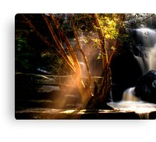 I Can See the Light - Somersby Falls, NSW Canvas Print