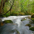 River at Lake St' Clair National Park by Michael Walters