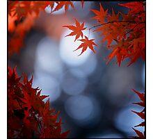 Autumn colours; Yoyogi Park, Tokyo, Japan Photographic Print