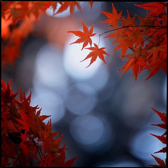 Autumn colours; Yoyogi Park, Tokyo, Japan by Alfie Goodrich