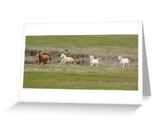 Mares in Spring Greeting Card
