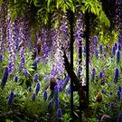 Secret Garden by Crispin  Gardner IPA