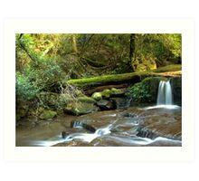 Paradise in the Rainforest - Kangaroo Valley, NSW Art Print