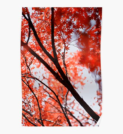 Looking up into another world; Yoyogi Park, Tokyo, Japan Poster