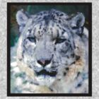 Snow Leopard T by Selina Tour