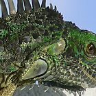 Green Iguana by caymanlogic