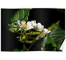 Strawberry Blossom Poster